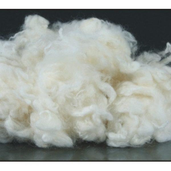 raw-wool-1